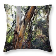 Santa Barbara Eucalyptus Forest Throw Pillow