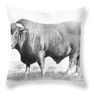 Santa Gertrudis Bull Throw Pillow