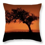 Santa Ynez Oak Tree Throw Pillow