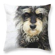 Santorini Dog Throw Pillow