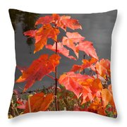 Sapling By The Pond Throw Pillow