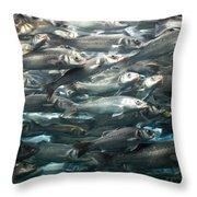 Sardines 1 Throw Pillow
