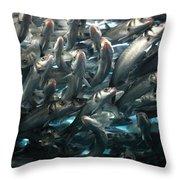Sardines 2 Throw Pillow
