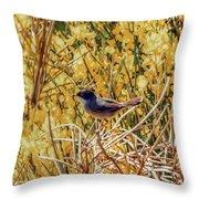 Sardinian Warbler Throw Pillow