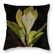 Sassafras Leaves Throw Pillow