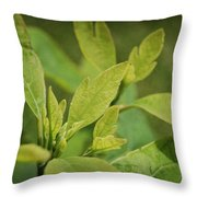 Sassafras Tree Throw Pillow