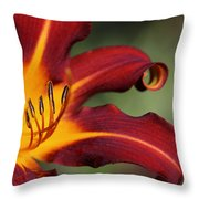 Sassy Daylily Throw Pillow