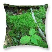 Sassy Sapling Throw Pillow