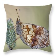 Satyr Butterfly On Blade Of Grass Throw Pillow