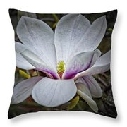 Saucer Magnolia - Magnolia Soulangeana Throw Pillow