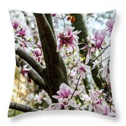 Saucer Magnolias In Central Park Throw Pillow
