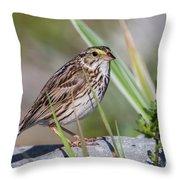 Savanah Sparrow Throw Pillow