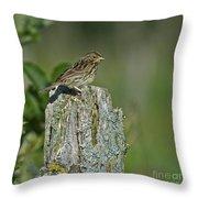 Savannah Sparrow.. Throw Pillow