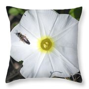 Sawfly On A Beach Morning Glory Flower Throw Pillow