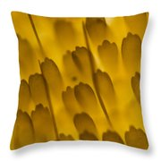 Scales Of A Butterfly Wing, Lm Throw Pillow