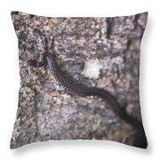 Scared Barter Snake Throw Pillow