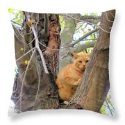 Scared Up A Tree Throw Pillow