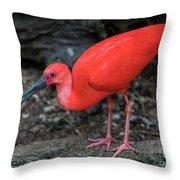 Scarlet Ibis Throw Pillow