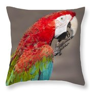 Scarlet Macaw - 2 Throw Pillow
