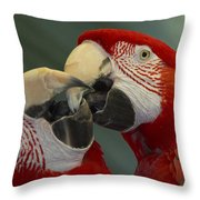 Scarlet Macaw Ara Macao Pair Kissing Throw Pillow