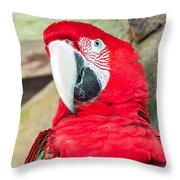 Scarlet Macaw Face Throw Pillow