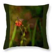 Scarlet Milkweed And Butterfly Throw Pillow