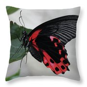 Scarlet Mormon Butterfly #2 Throw Pillow