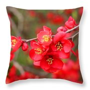 Scarlet Quince Blooms Throw Pillow