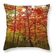 Scarlet Rebel #2 Throw Pillow