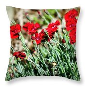 Scarlet Red Dianthus Throw Pillow