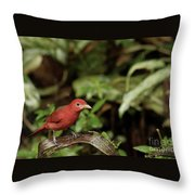 Scarlet Tanager In Costa Rica Throw Pillow