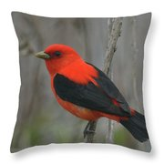 Scarlet Tanager On Stalk Throw Pillow