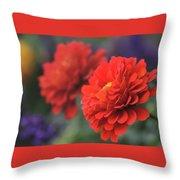 Scarlet Zinnias Throw Pillow