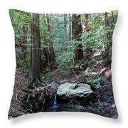 Scents And Subtle Sounds On Mount Tamalpais Throw Pillow