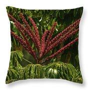 Schefflera Flower Throw Pillow