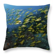 School Of Yellow Snapper, Great Barrier Throw Pillow