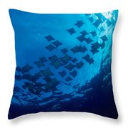 Schooling Cownose Rays Throw Pillow