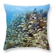 Schools Of Grunts, Snappers, Tangs Throw Pillow by Karen Doody