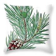 Scots Pine, Pinus Silvestris Throw Pillow