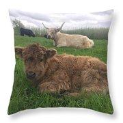 Scottish Highland Calf Throw Pillow