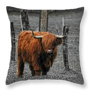 Scottish Highlander Throw Pillow