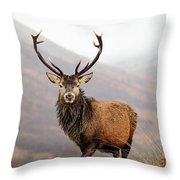 Scottish Red Deer Stag - Glencoe Throw Pillow