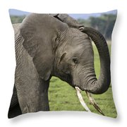 Scratching An Itch Throw Pillow