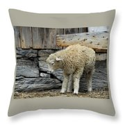 Scratching Board Throw Pillow