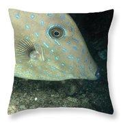 Scrawled Filefish Profile, Alutera Throw Pillow