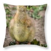Screamer Chicking Eating His Spinach Throw Pillow