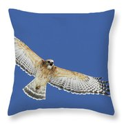 Screaming Hawk Throw Pillow