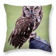 Screech Owl Perched Throw Pillow by Athena Mckinzie