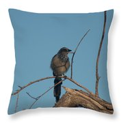 Scrub Jay Private Eye Throw Pillow