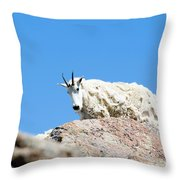 Scruffy Mountain Goat On The Mount Massive Summit Throw Pillow